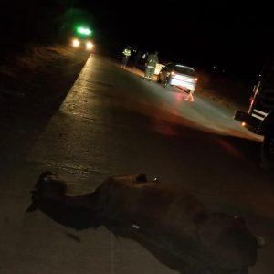 Accidente con caballo suelto